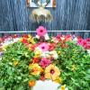 Sri Guru Purnima and Punyatithi Celebration